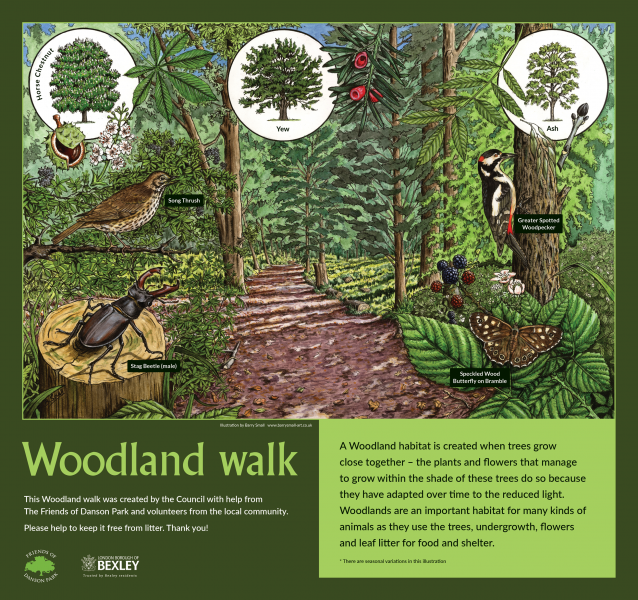 Habitat illustration for Woodland Walk