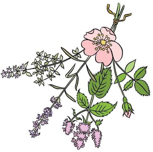 Stephanie-Strickland-Herbs