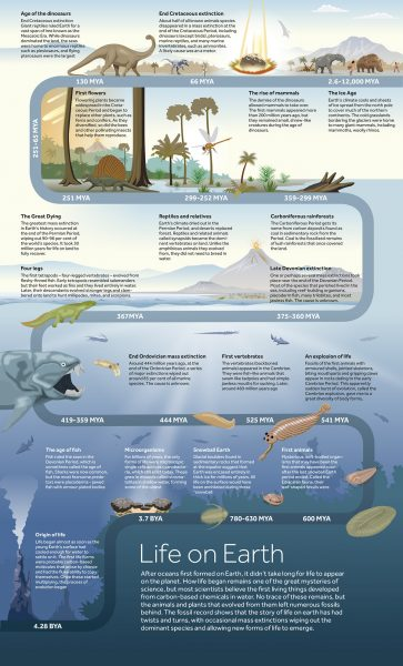 Infographic illustration: Life on Earth timeline