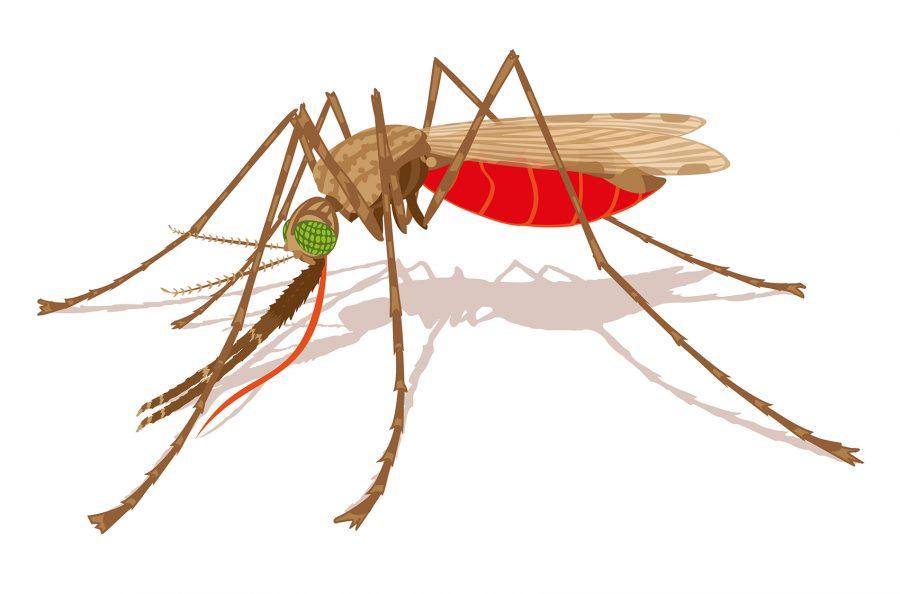 Malaria Mosquito A. Gambiae