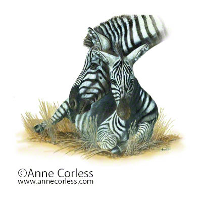A Gentle Touch; zebras
