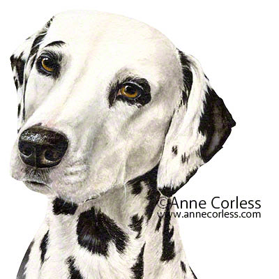 Dalmatian Dog; watercolour painting