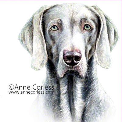 Weimaraner Dog; watercolour painting
