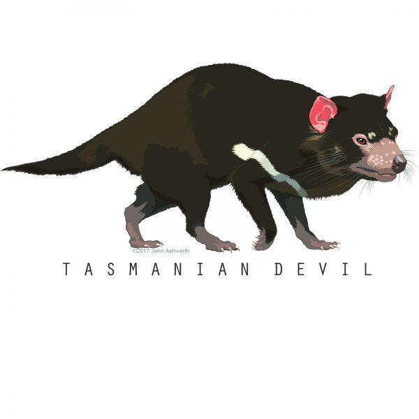 John Ashworth Tasmanian Devil