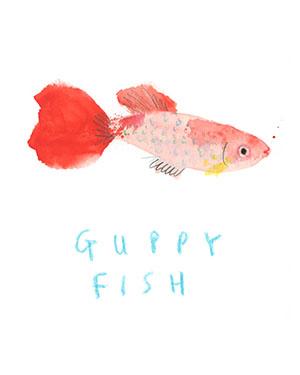 jenni desmond guppy fish