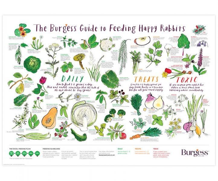 Burgess Rabbit poster