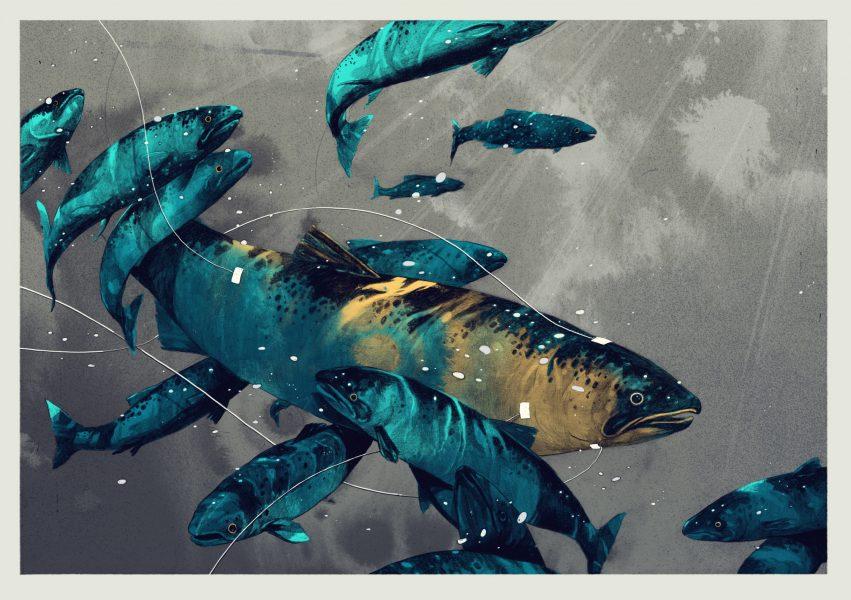Dangerous Salmon / Outside Magazine