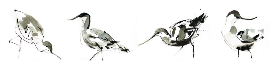 Avocet collection