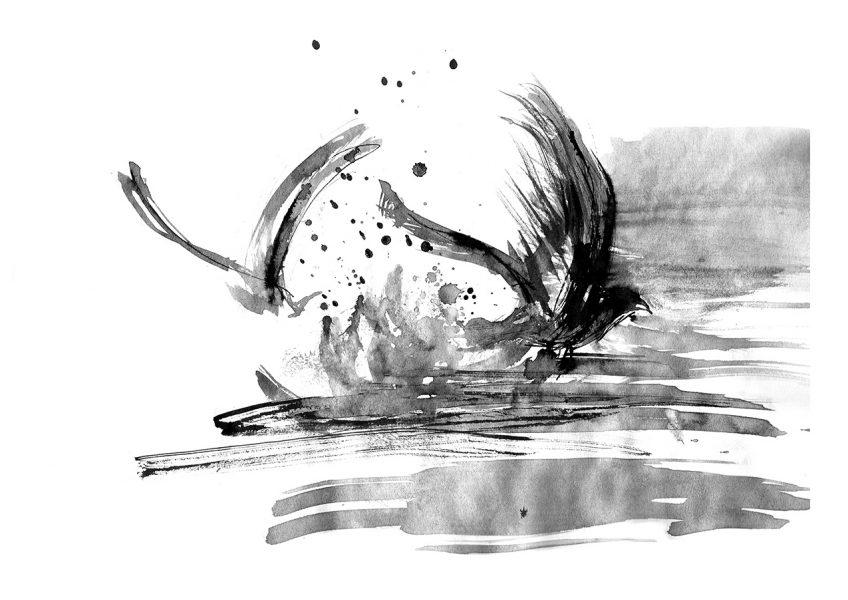 Shearwater diving