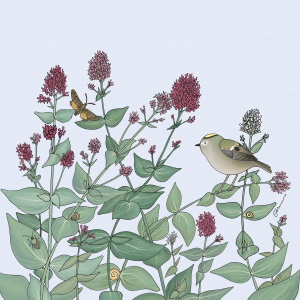 Goldcrest and Valerian