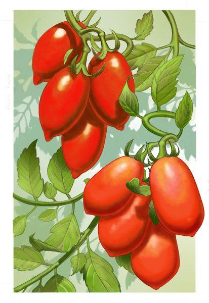 OFA 2017 Garden Cal July TomatoesDI 1600