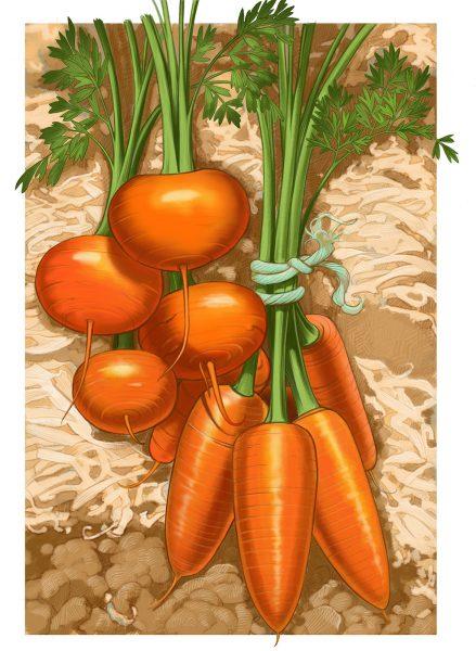 OFA 2017 Garden Cal May Carrots DI 1600