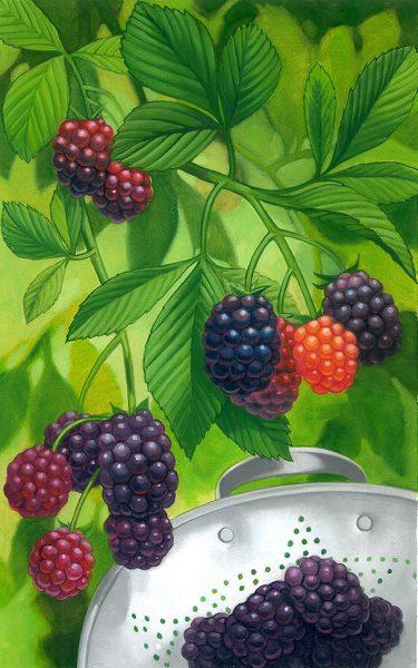 OFAAugBlackberries_web