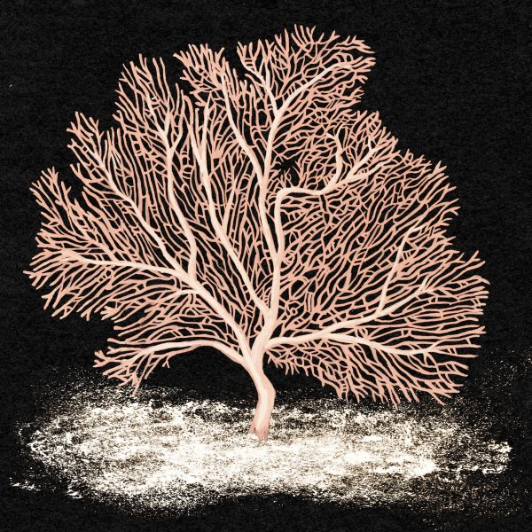 ENDANGERED CORAL - SEA FAN