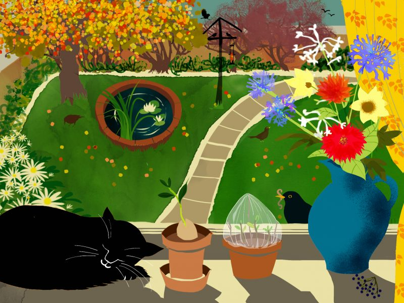 Cat and Blackbird