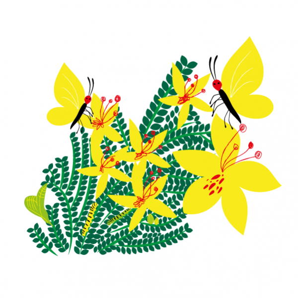 Palo Verde and the Clouded Yellow VT