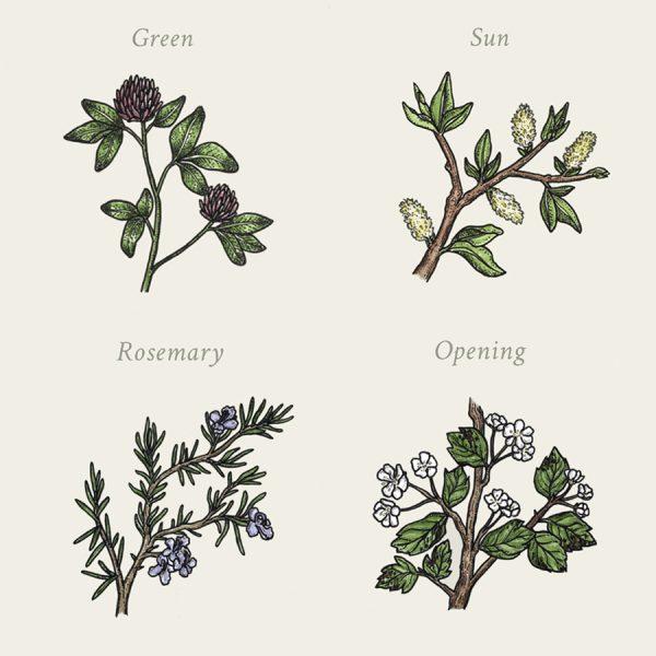 Seed - Botanics