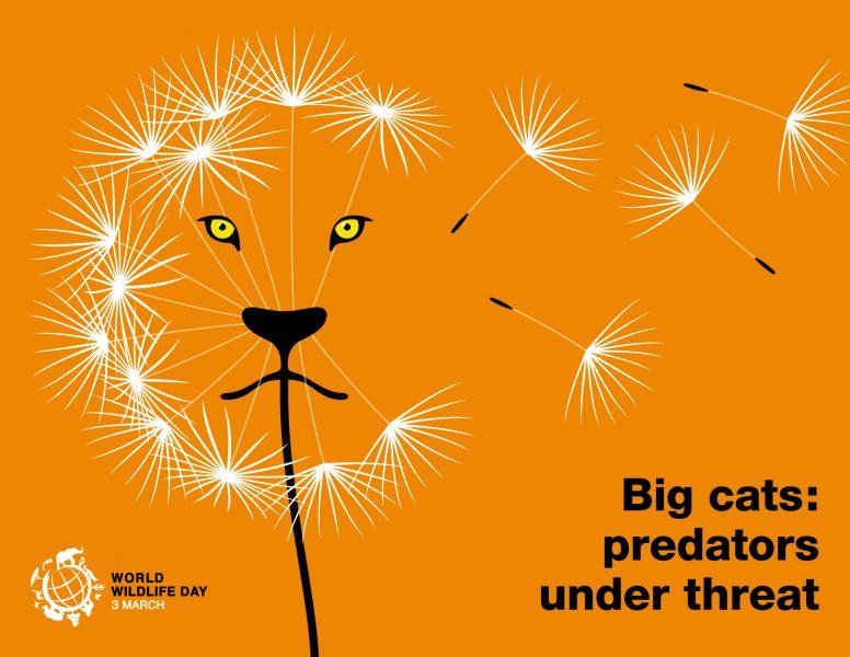 Big Cats / World Wildlife Day