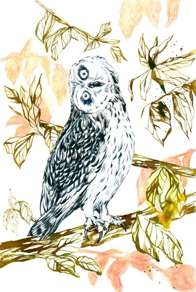 owl - bird illustration