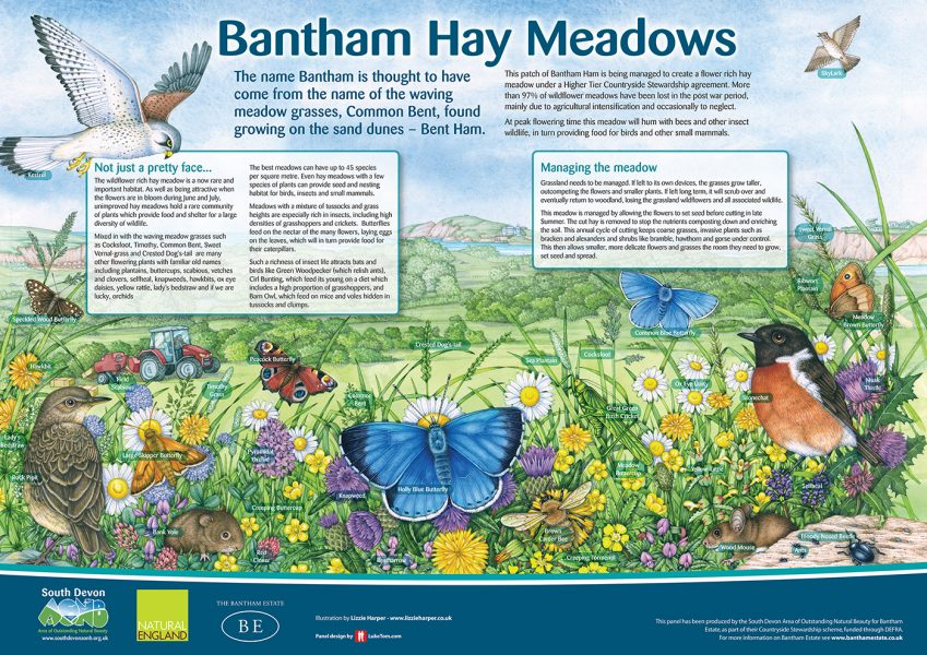 Bantham Hay Meadows Interpretation Board illustration by Lizzie Harper