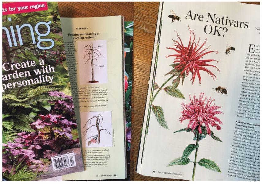 Fine Gardening Magazine ~ Watercolor