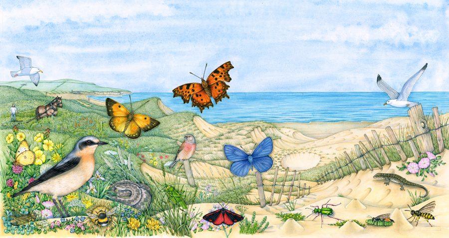 Sand dune landscape evolution