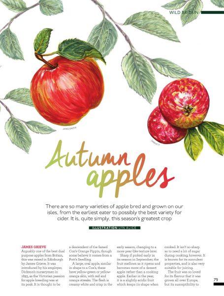 British Apple Varieties ~ Watercolor