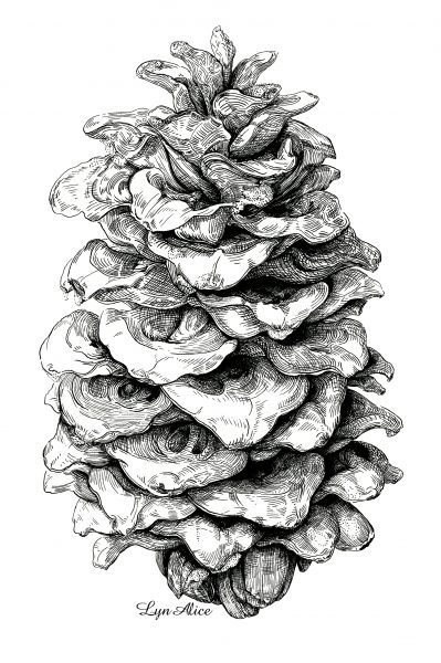 Pinus ponderosa ~ Quill & Ink, Denver Botanical Gardens