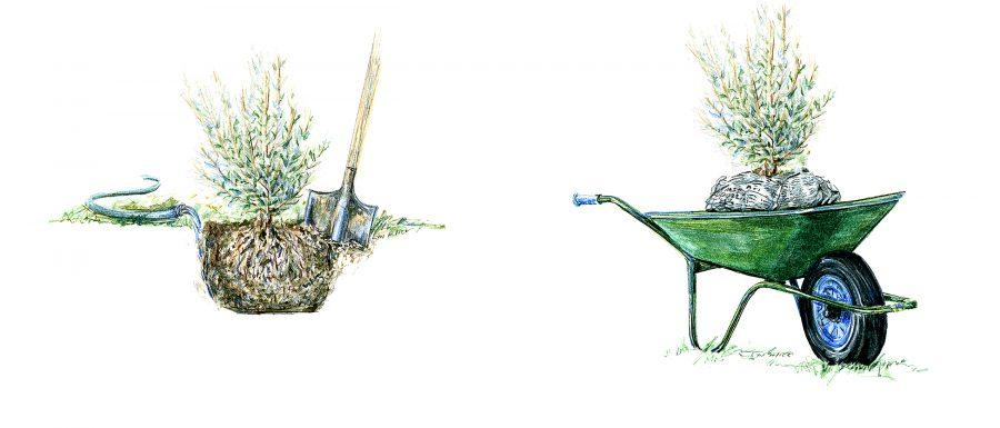Fine Gardening Magazine, Editorial ~ Watercolor