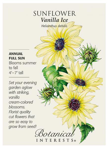 Sunflower, Vanilla Ice ~ Watercolor, Botanical Interests Inc.