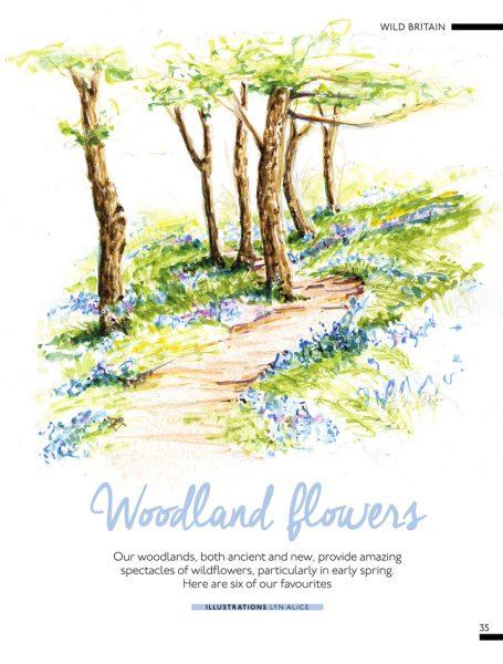 British Woodland Flowers ~ Watercolor