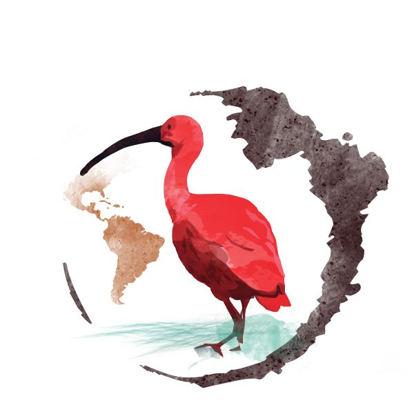 Ibis rosso_2018