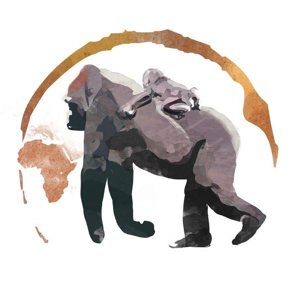 gorilla di montagna_2018