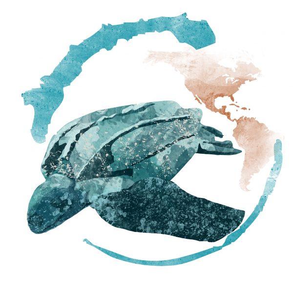 tartaruga liuto_2018