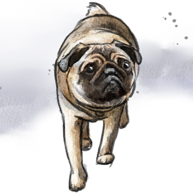 Stuey the Pug