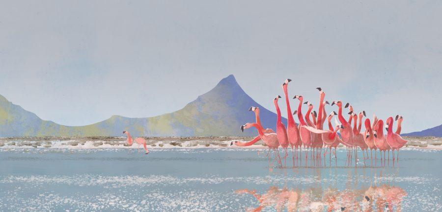 Flamingoes dancing
