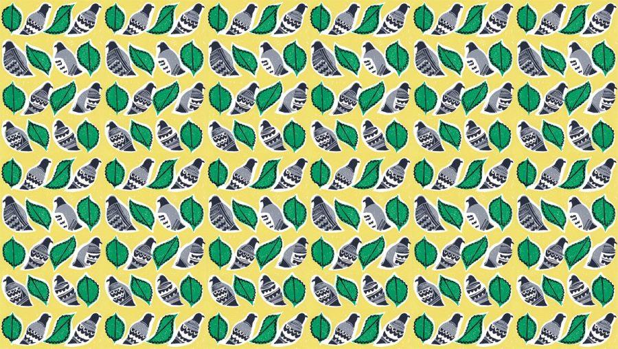 Pigeons & Limes