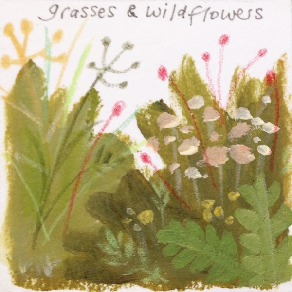 Grasses and Wildflowers