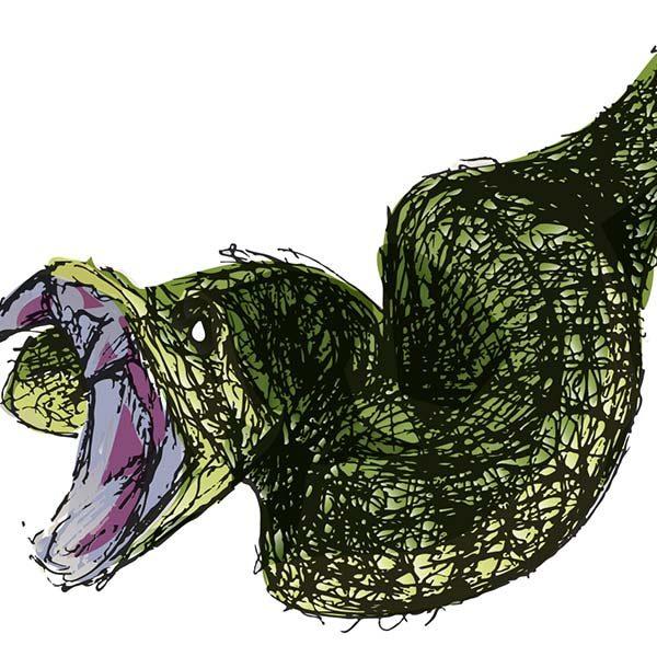 study_snake_ft