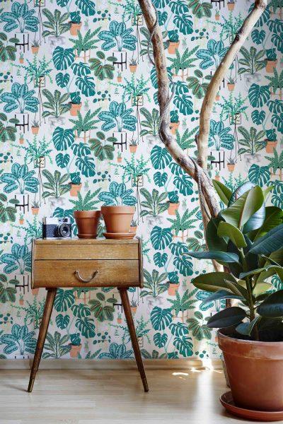 WR424JAC_House Plants_insitu1sm