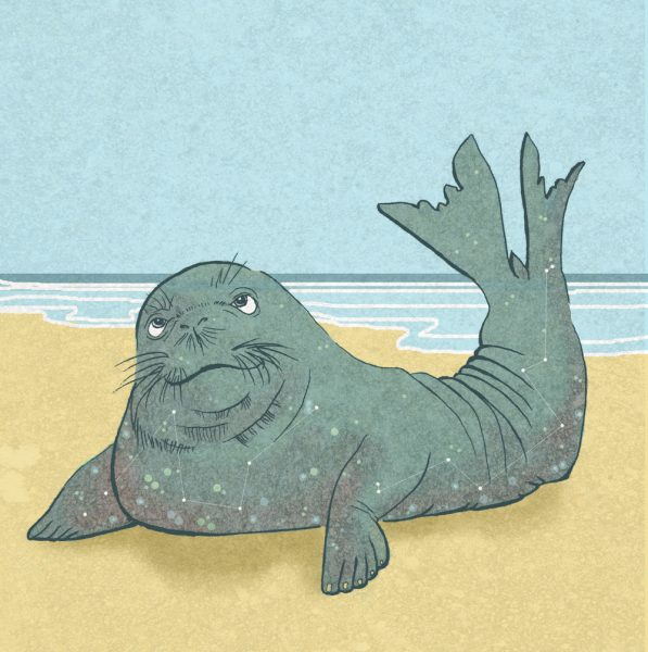 Monk Seal illustration