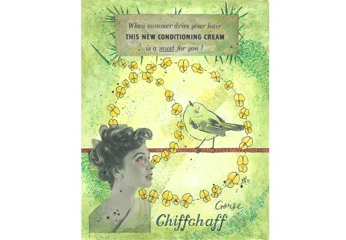 'Chiff Chaff'