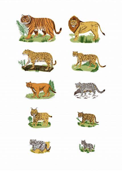 BBC Big Cats