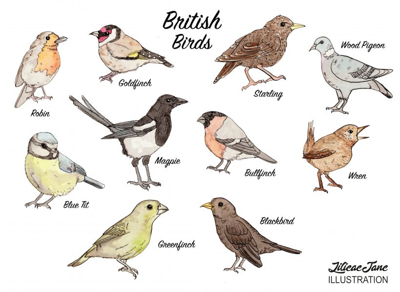 British bird guide