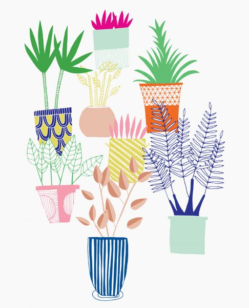 House Plants Illustration