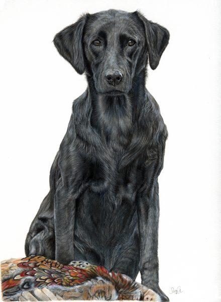 Canine Portrait 'Izzy'