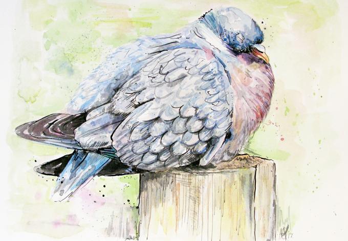'Wood Pigeon'