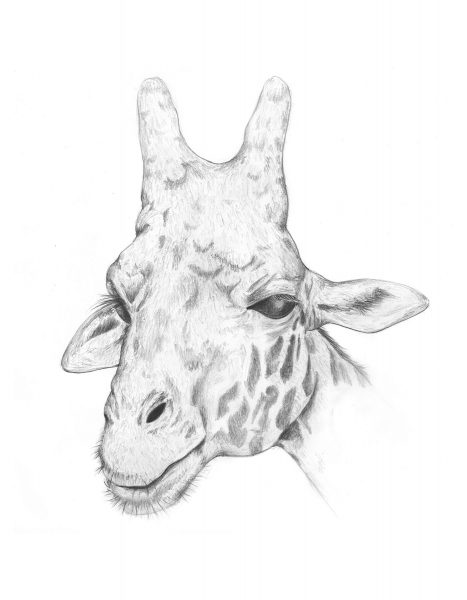giraffe-pencil_LR