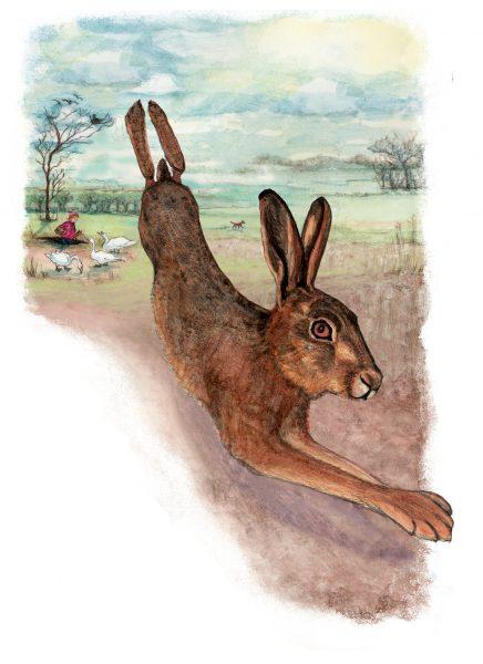Hare runs away from the fox