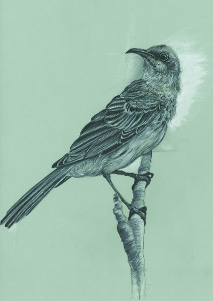 To kill a Mockingbird 'sketch'